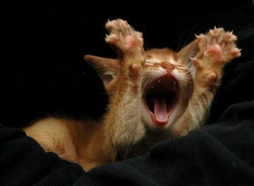micio che si stiracchia (articolo sui gattari) dans ARTICOLI INTRESSANTI sbadiglio-di-gatto-3