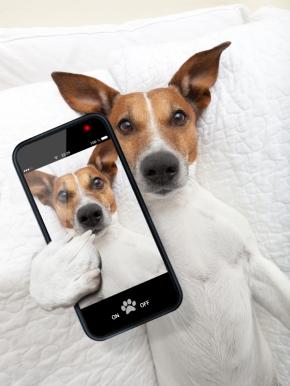 dog-and-smartphone