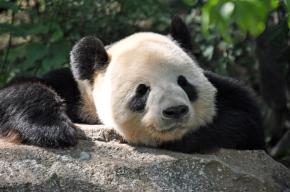 bored-panda-teresa-blanton